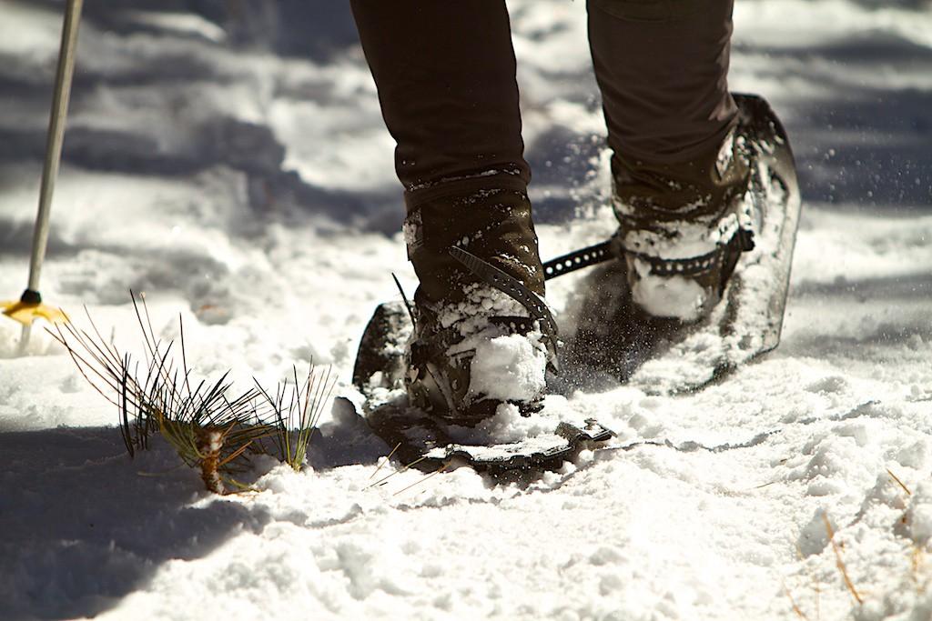 Snow Shoe Shuffle